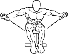 rear delt cable flyes
