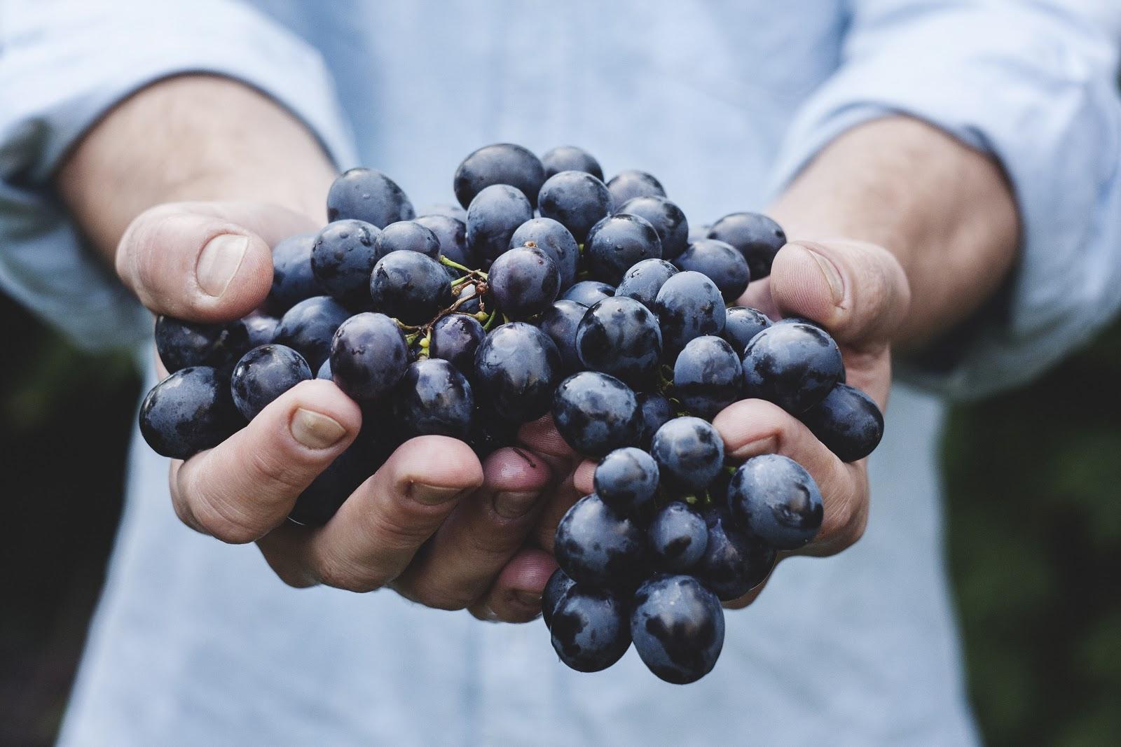 guide to nourishing the body