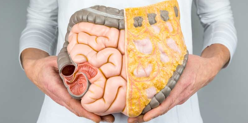 What Is Visceral Fat internal organs