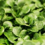 5 Superfoods Which Will Keep Your Eyes in Perfect Health