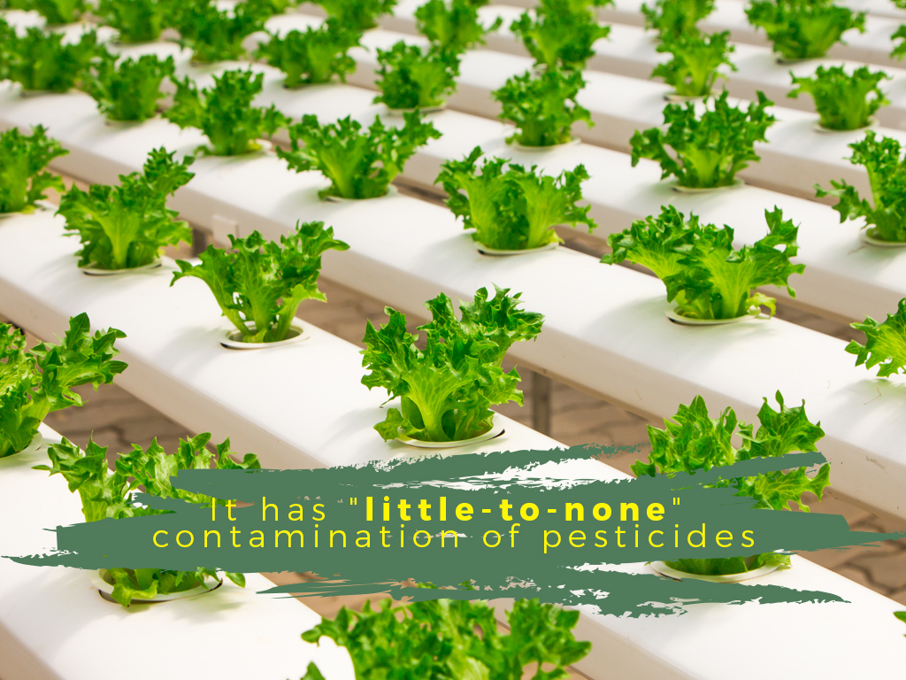 Organic Foods no pesticides on crops