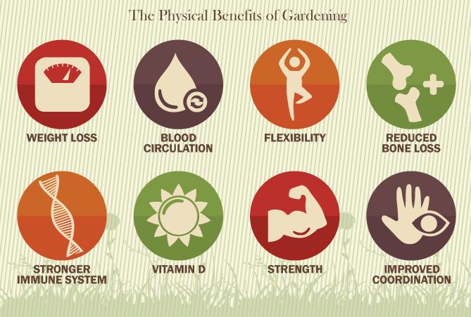The Health Benefits of Gardening chart