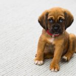 How to Keep Your Dog Daycare Facility Clean and Healthy
