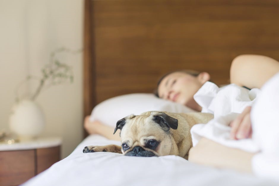 Reasons why Dogs are the Best Emotional Support Animals dog on bed