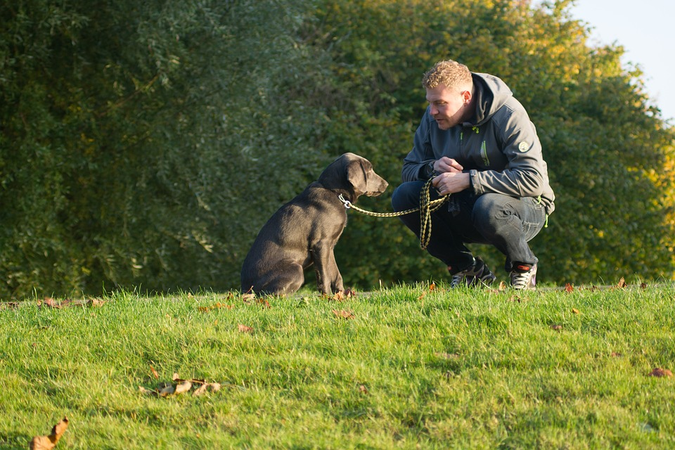 Science-Based Dog Training – And The Inherent Flaws