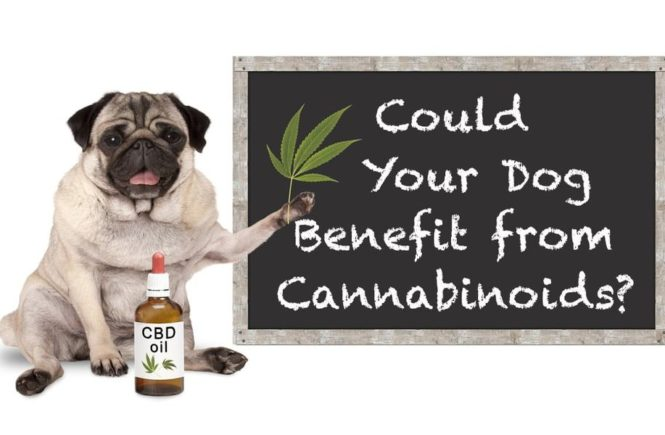 The 3 Best CBD Products for Your Pet