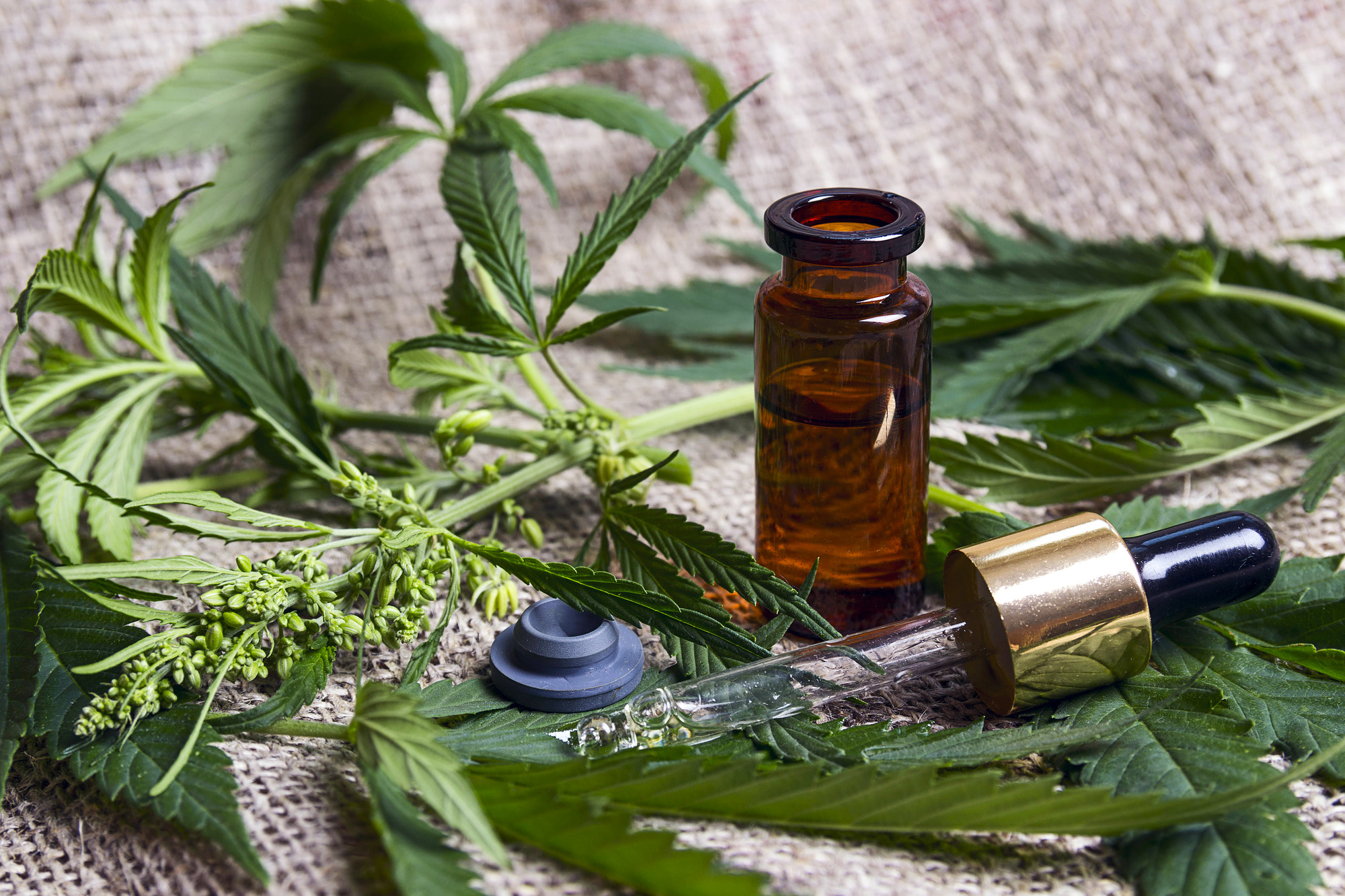 Ready to Shed Some Pounds? Try CBD for Weight Loss