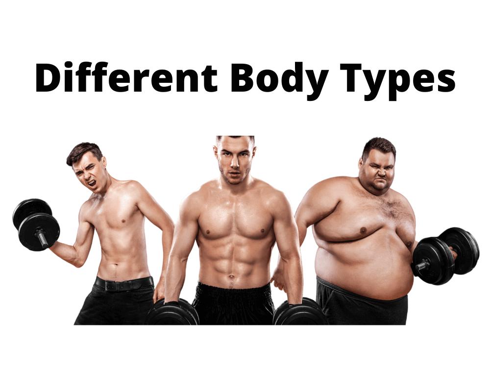 build body type